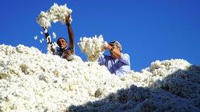 Filmszene Baumwolle